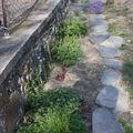 2009 04 22 Allée de plantes vivaces