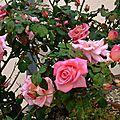 roses sept14