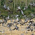 Danse avec les oiseaux