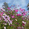 Fleurs à la pelle