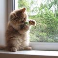 Les chats (68)