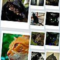 Portraits d'animaux...