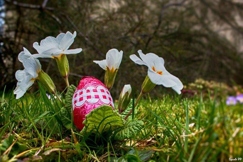Concours d'avril: c'est le printemps !!