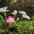 Concours d'avril: c'est le printemps, par Sylvain