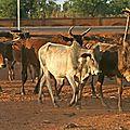 Ouagadougou (6)