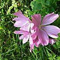 P1070721 Une jolie fleur
