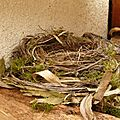 Les <b>nids</b> d'oiseaux