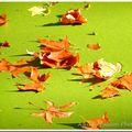 Feuilles d'automne sur lentilles d'eau