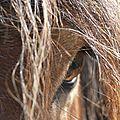 Débardage et Traction Animale à Noirétable (42)