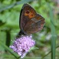 Papillons de l'été: moiré
