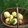 coings - www.passionpotager.canalblog.com