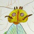 Dimitri Drôle d'insecte enfant