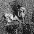 Onibaba (1964) de kaneto shindô