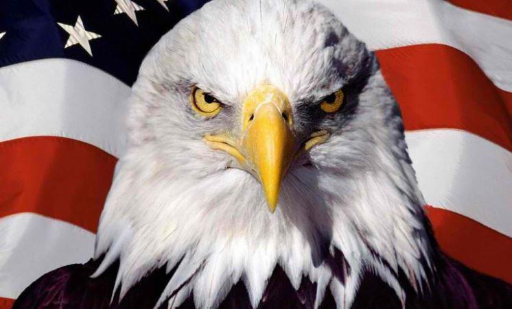aigle-américain