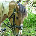 balade equestre gastronomique à La Lucerne d'Outremer (94)
