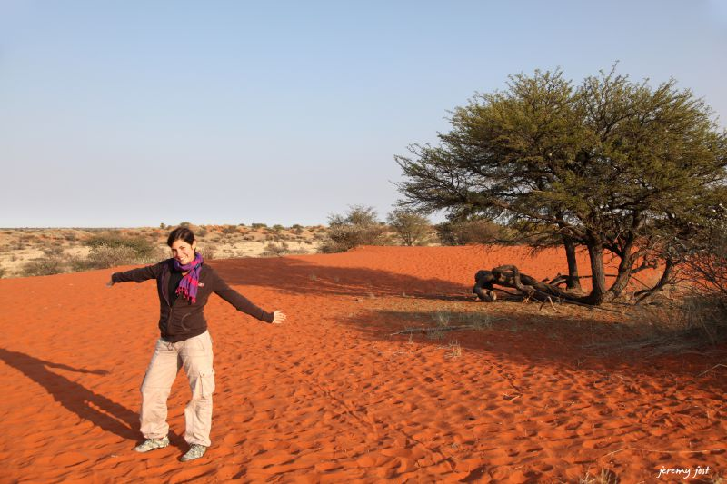 nol dune du kalahari