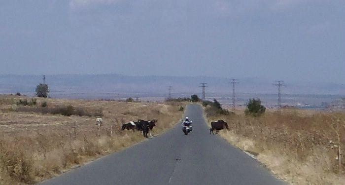 bulgarie : au milieu du troupeau