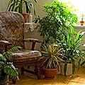 Plantes dépolluantes par: jean-louis