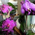fleurs mars2010
