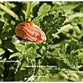 Goût de framboise (raspberry's taste)
