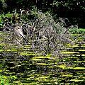 Lac de Pététoz (14)