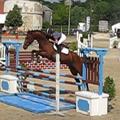Cso jeûnes chevaux à senlisse