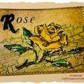 série ROSES -n°1 - 01/01/2011