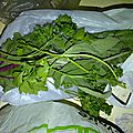 legumes recup (6)