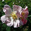 La flore en photo