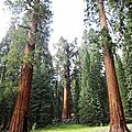 Roadtrip Californie #09 <b>Sequoia</b> Park et Kings Canyon
