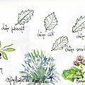 Flore du Causse