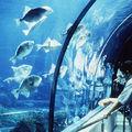 L' Aquàrium de <b>Barcelone</b>