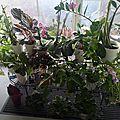 Mes petites plantes !