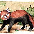 Panda roux en a6