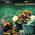 Collections boutiques 2012 - 5