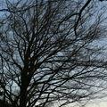2009 03 15 Obscurité ses les branche au coucher du soleil