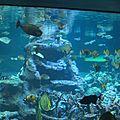 La <b>Cité</b> de la <b>Mer</b> à Cherbourg : l'aquarium abyssal