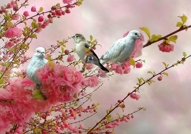 oiseaux surarbrerose9066_1112563086_n