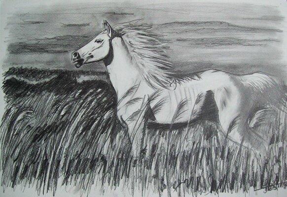 dessin cheval camargue