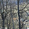 B Photos JMP©Koufra 12 - Millau - 24 fév 2017 - 0159-1