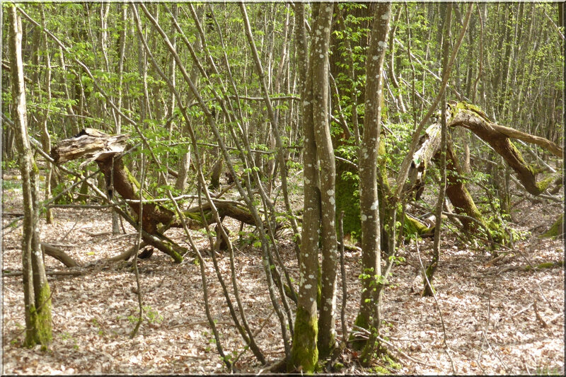 Geocaching foret d'Orleans (16)