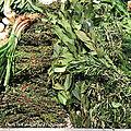 <b>Herbes</b> <b>Aromatiques</b> et leurs Bienfaits