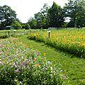 labyrinthe des fleurs
