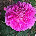 la maculée (jardin)