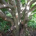 Quel arbre compliqué !