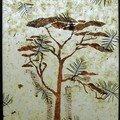 Marie L'arbre adulte