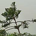 Delhi - un jardin en hauteur