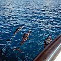 TAHA'A (Île Vanille) 15 - Dauphins