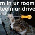 Stealin'cat