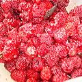 Gelé de fruits